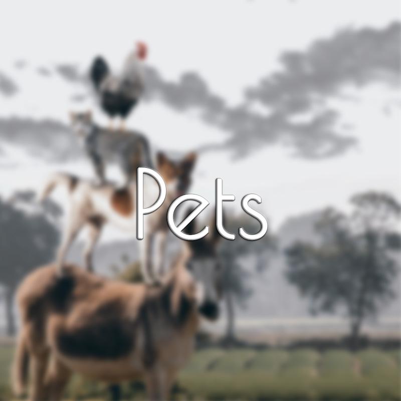 emotion code for pets